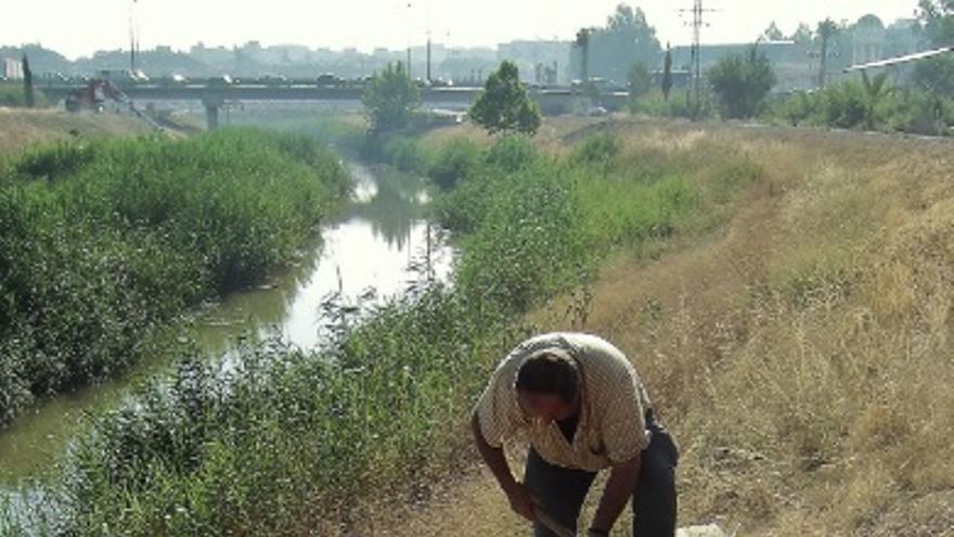Aguas subterráneas del sondeo Barriomar incorporándose al río Segura. A unos 400 metros del Ayuntamiento de Murcia en 2006