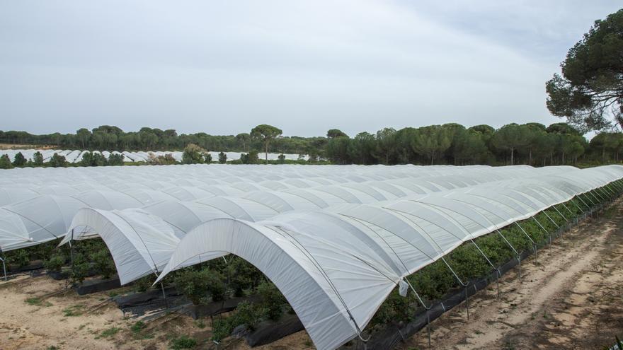 Cultivo bajo plástico de Doñana. Guillermo Prudencio (WWF)