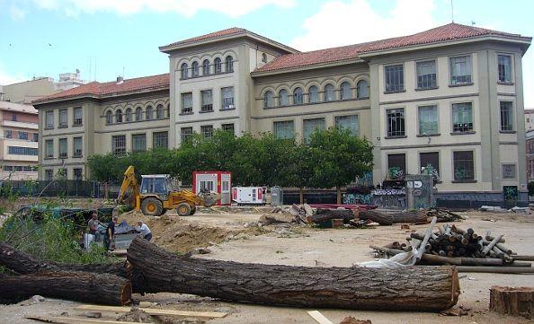 Sólo perviven los árboles más cercanos al colegio   A.P.
