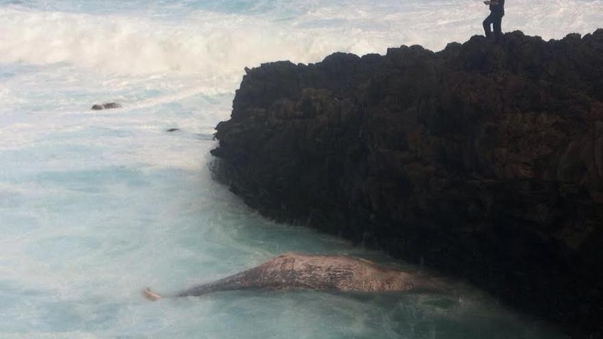 En la imagen, el cadáver de la ballena, este miércoles, en la la costa de Barlovento.