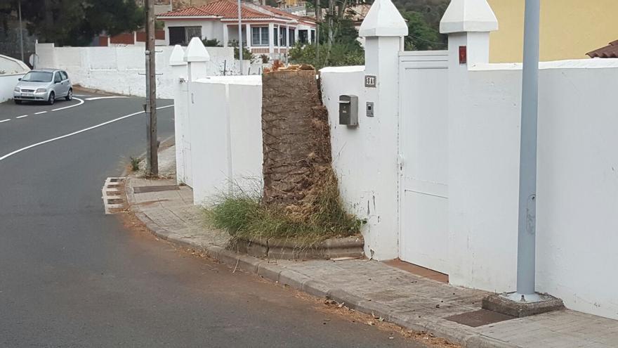 Palmera en la Calle Las Brisas 3A en la Urbanización Cuesta La Grama