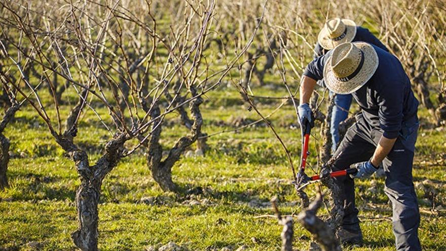 """El Consejo de la DOC Rioja califica de 'buena' la cosecha 2018 marcada por la """"incertidumbre""""."""
