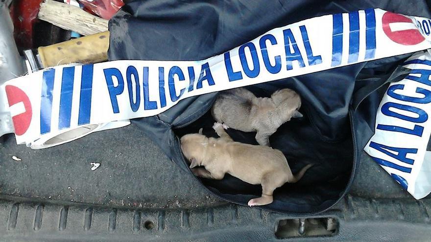 Cachorros de perro abandonados y rescatados en Torrijos