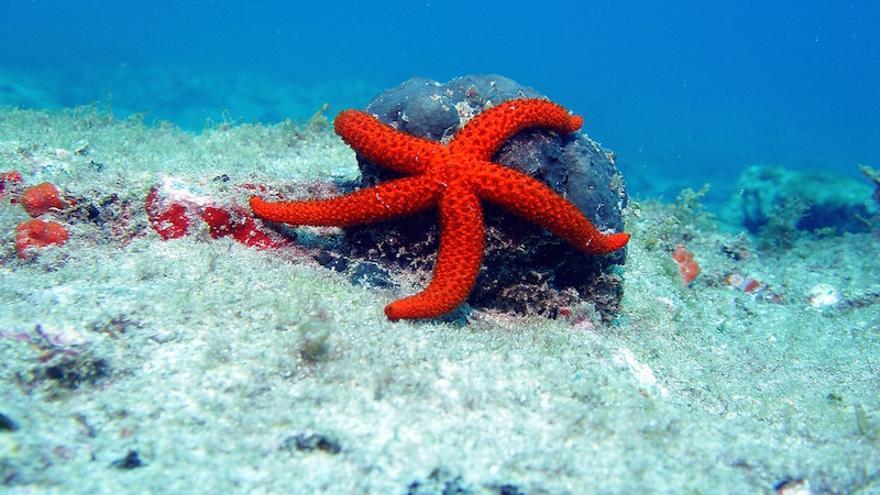 Estrella de mar en la Franja Marina de Mogán