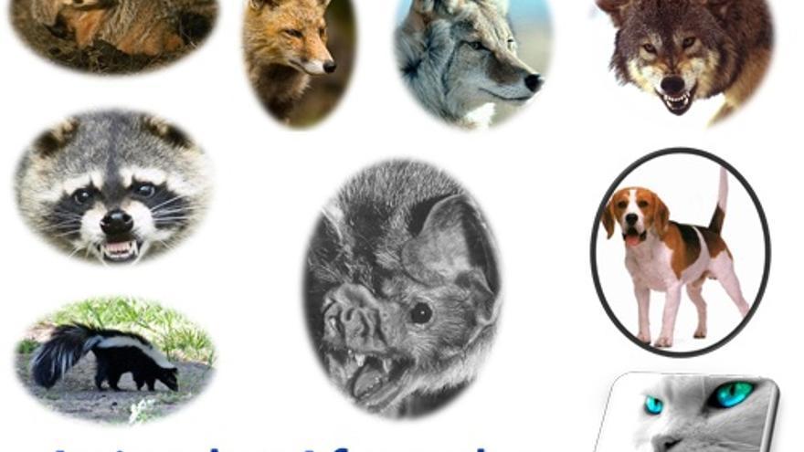 Animales afectados por rabia.