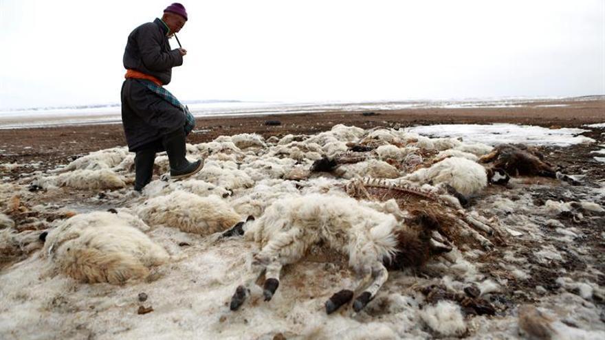Cruz Roja pide ayuda para 150.000 nómadas mongoles por la dura climatología
