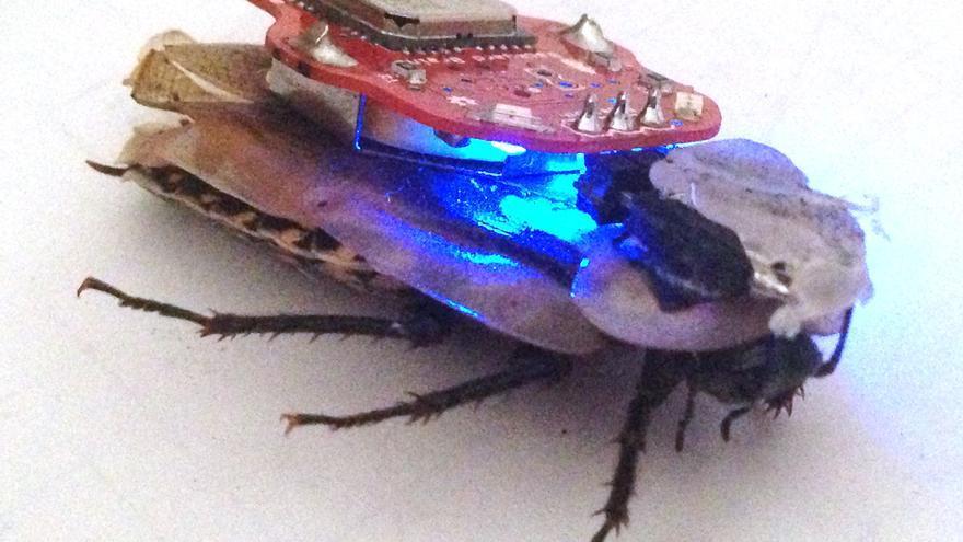 El kit de RoboRoach busca ser un elemento educativo