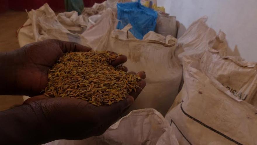 Almacén de semillas autóctonas de la zona norte de Guinea Bissau / FOTO: Alberto Senante