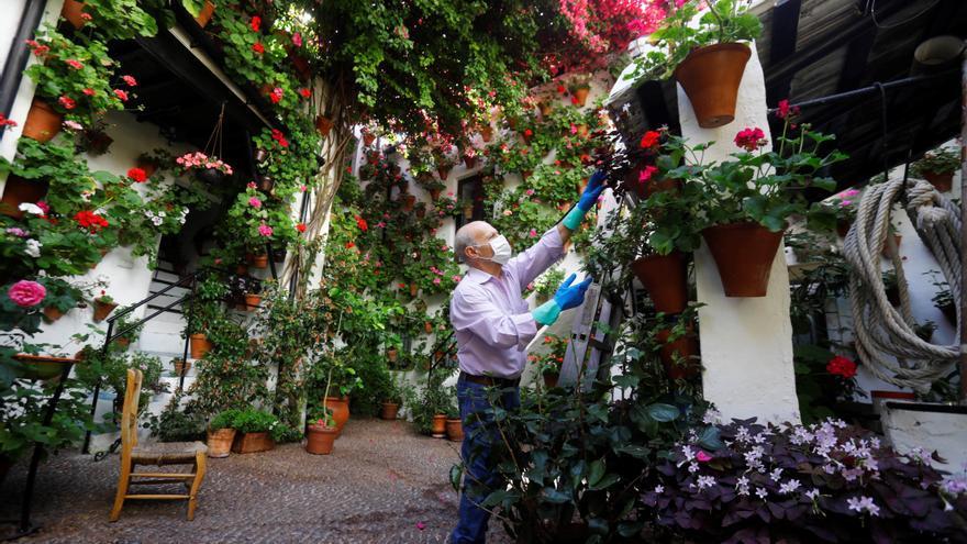 Los Patios de Córdoba sueñan su primavera