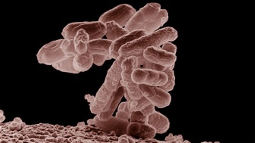 E.Coli /Escherichia Coli