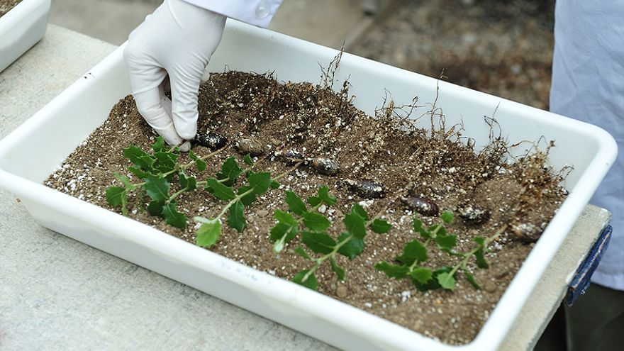 La DPH pretende asentar a la población a través de la truficultura.