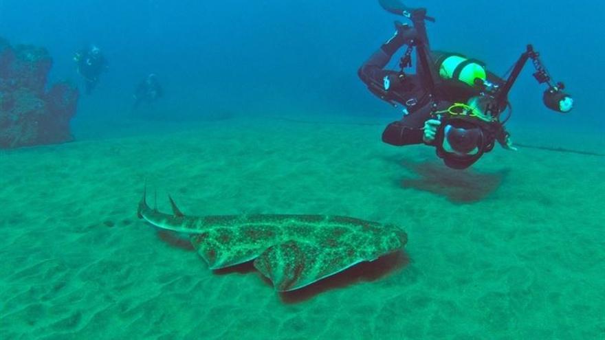 La charla está organizada por la Asociación Alianza por los tiburones de Canarias