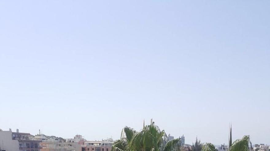 Manchas de microalgas se extienden por la costa de Mogán.