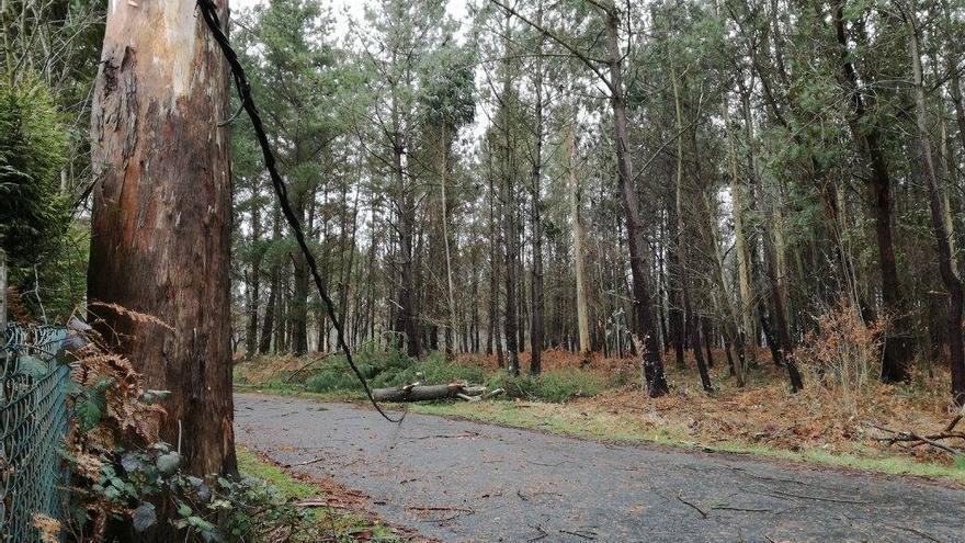 Tendido eléctrico afectado por la caída de árboles en Oroso, cerca de Santiago