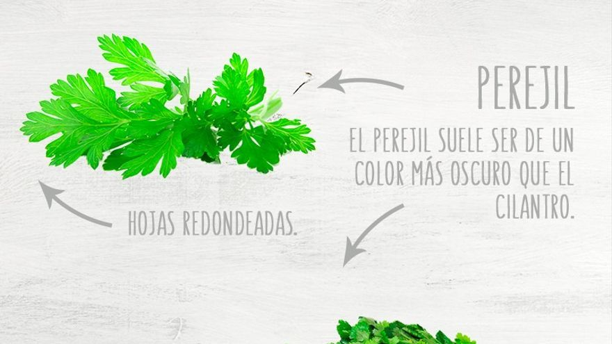 Las diferencias entre perejil y cilantro, cojonudamente explicadas en la web de la cadena mexicana HEB.