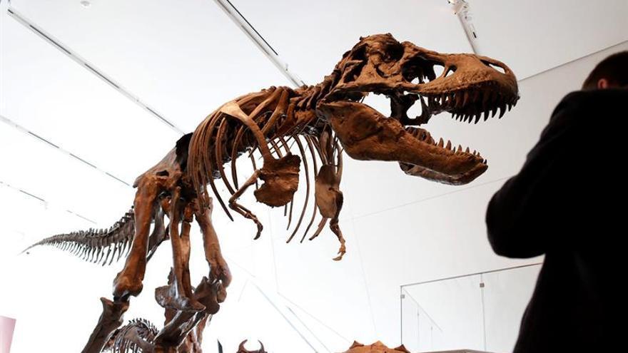 La evolución de los grandes dinosaurios favoreció los ornamentos craneales
