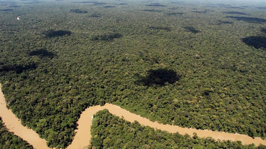 Yasuní, la recóndita reserva que acuna el 10 % de las especies del planeta