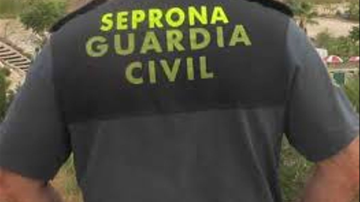Imagen de un agente del Seprona.