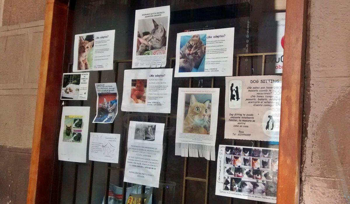 Animales en adopción en la calle Colón (pincha para ampliar) | SOMOS MALASAÑA