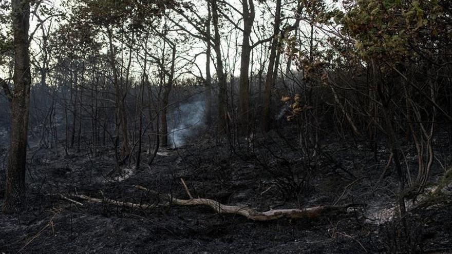 La ola de incendios forestales arrasó 49.000 hectáreas en Galicia