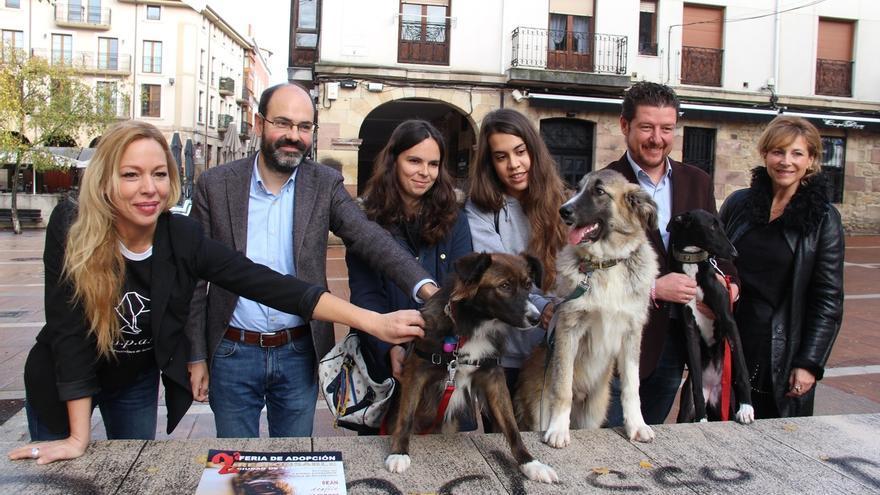 Unos 200 perros y gatos desfilarán el domingo en el MNG en la II Feria de Adopción de Torrelavega