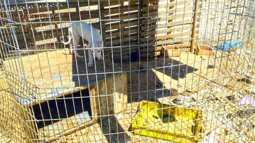 Uno de los perro hallados en estado deplorable / El Refugio.