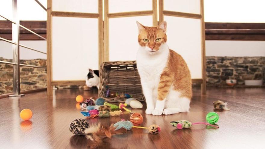 Cómo hay que lavar los juguetes de perros y gatos