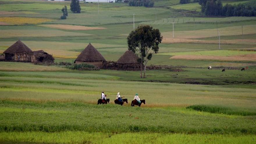 La FAO sostiene que la inversión agraria requiere expertos en seguridad alimentaria y nutrición