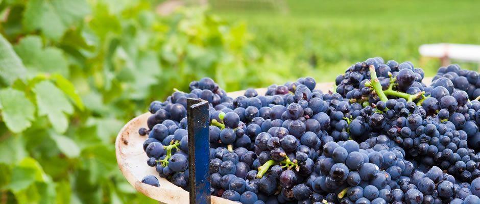Semana del Vino en Malasaña: cócteles hechos con vino