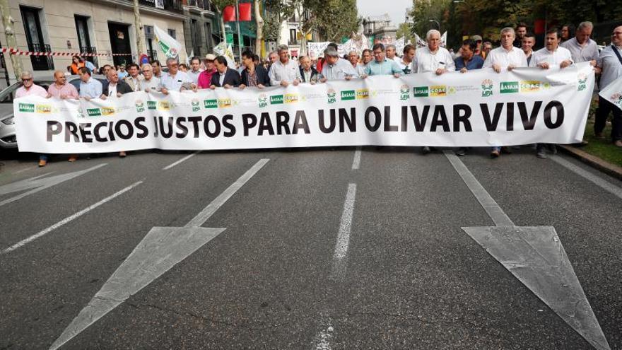 Sector olivarero pide medidas al Gobierno y a la UE y dice que no se rinde