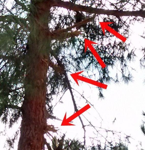 Detalle de uno de los árboles dañados por las obras