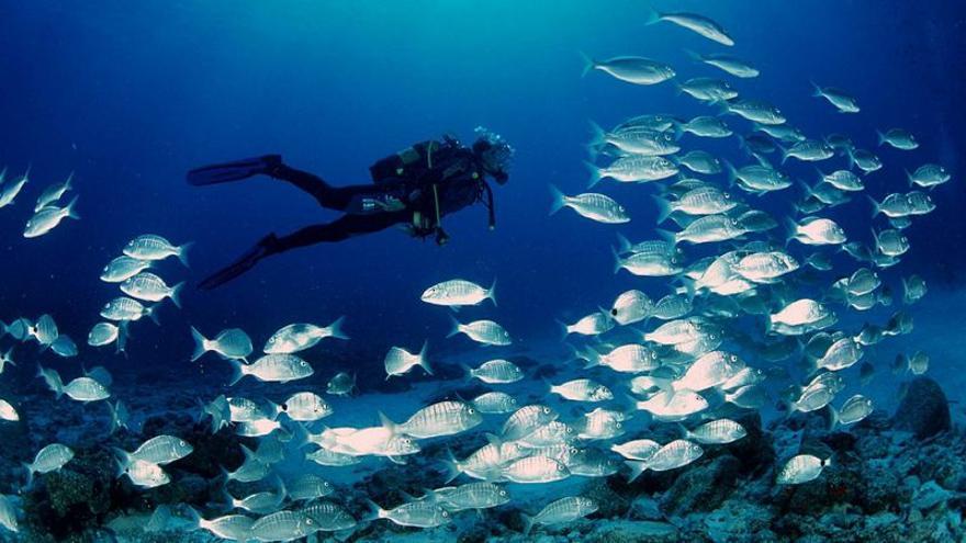 Submarinismo en aguas canarias.