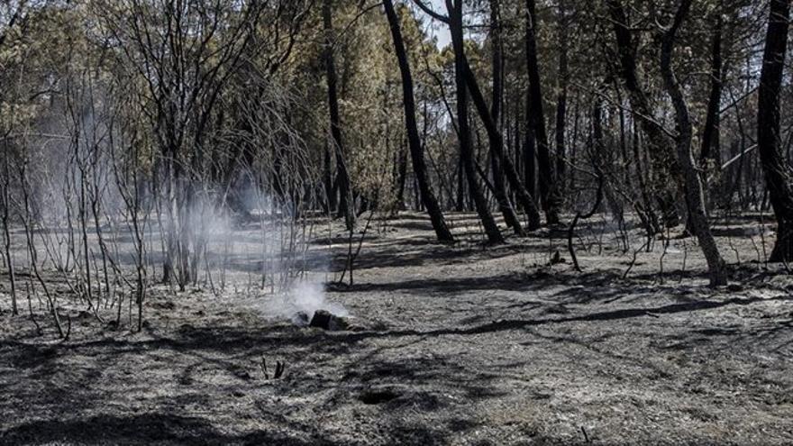 Incendio en Barchín del Hoyo (Cuenca)