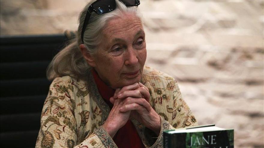 """Jane Goodall repudia la muerte """"injustificable"""" de dos chimpancés en Mallorca"""