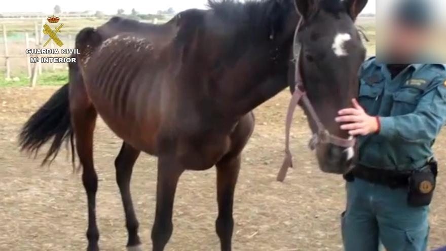 Imputada una persona acusada de maltratar a un caballo que presentaba claros síntomas de desnutrición