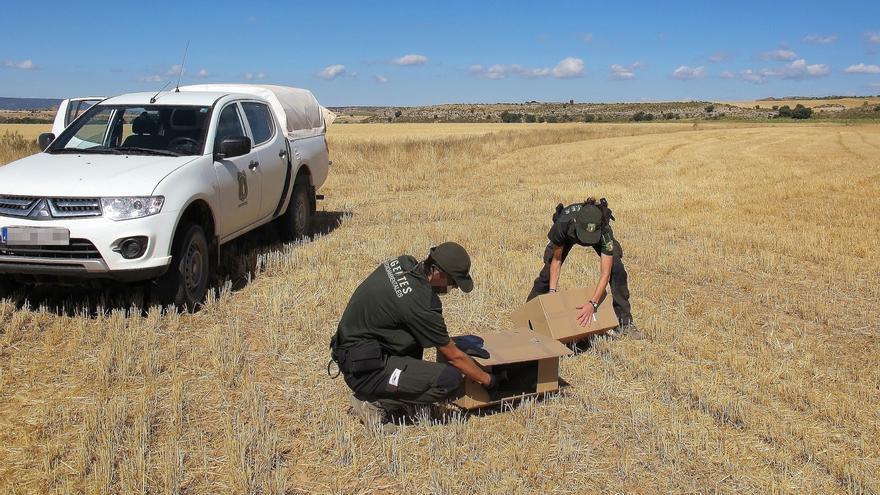 Agentes Medioambientales en Castilla-La Mancha