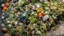 Desperdicio alimentos