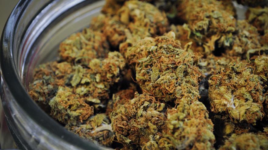 Los componentes más estudiados de la marihuana son el THC y el CBD