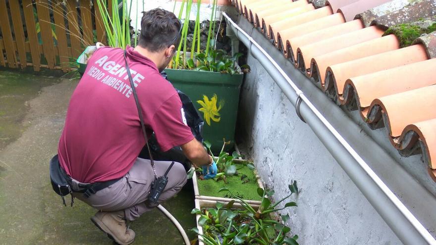 Agente de Medio Ambiente con las plantas incautadas.