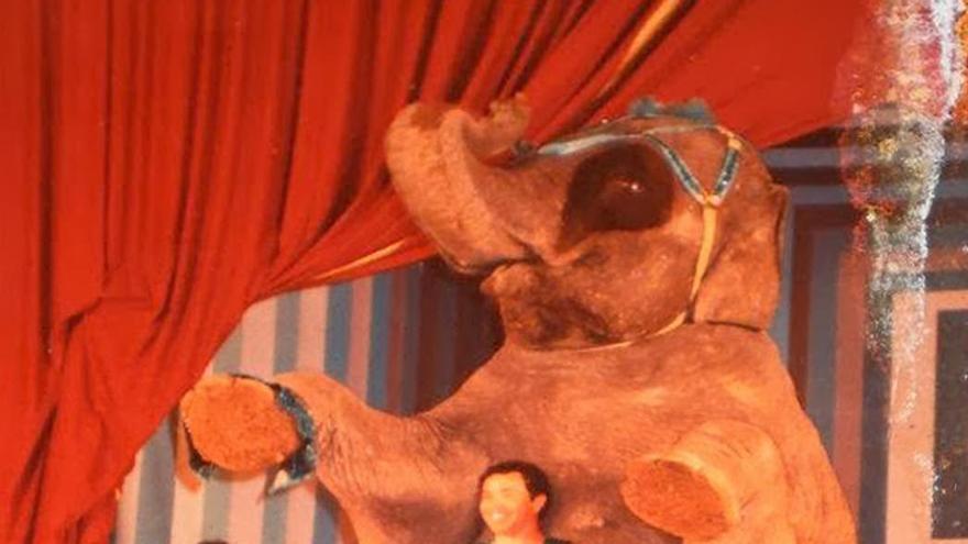 Mara pasó 25 años realizando en circos acciones contrarias a su naturaleza y para las que fue cruelmente adiestrada