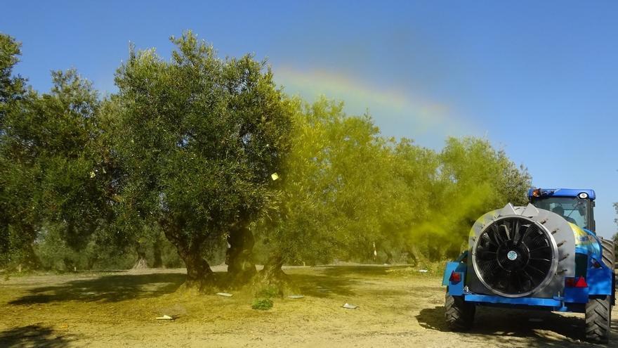 Un campo de olivos