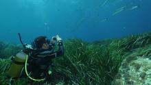 Invitados en los bosques sumergidos del Mediterráneo