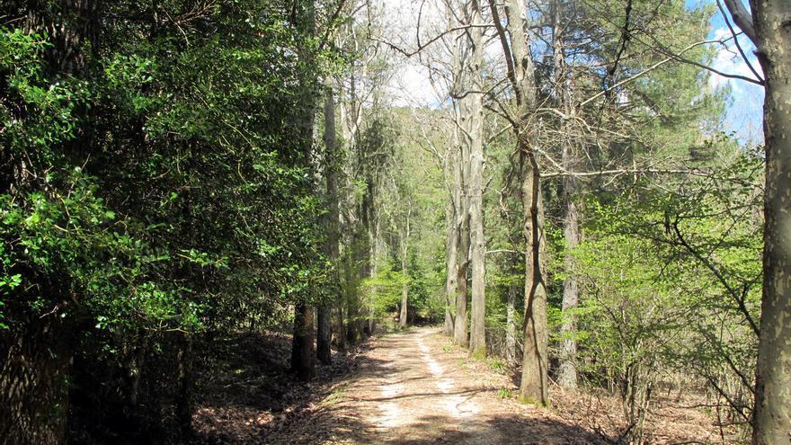 Un tramo del GR-247 Bosques del Sur.