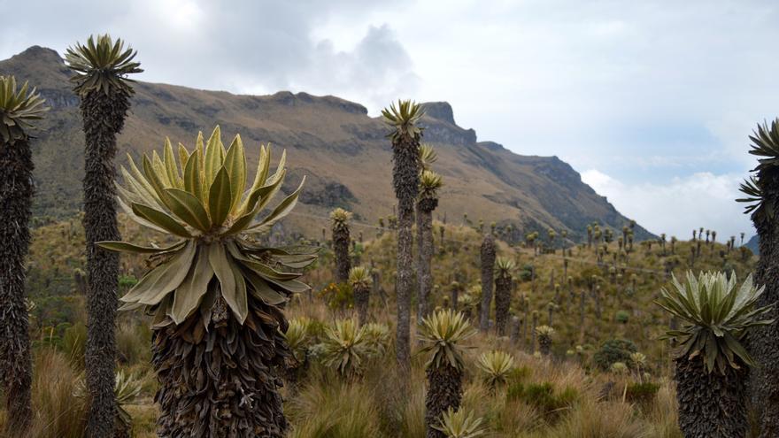 Dan un año de plazo al Gobierno colombiano para recuperar el Parque Los Nevados
