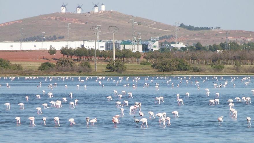 Laguna Camino de Villafranca FOTO: Carlos Camuñas