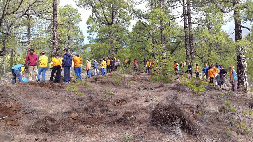 En la imagen, escolares del CEIP Mayantigo de Los Llanos de Aridane repoblando en el sotobosque de pinar de la Caldera. Foto:  Parque Nacional.