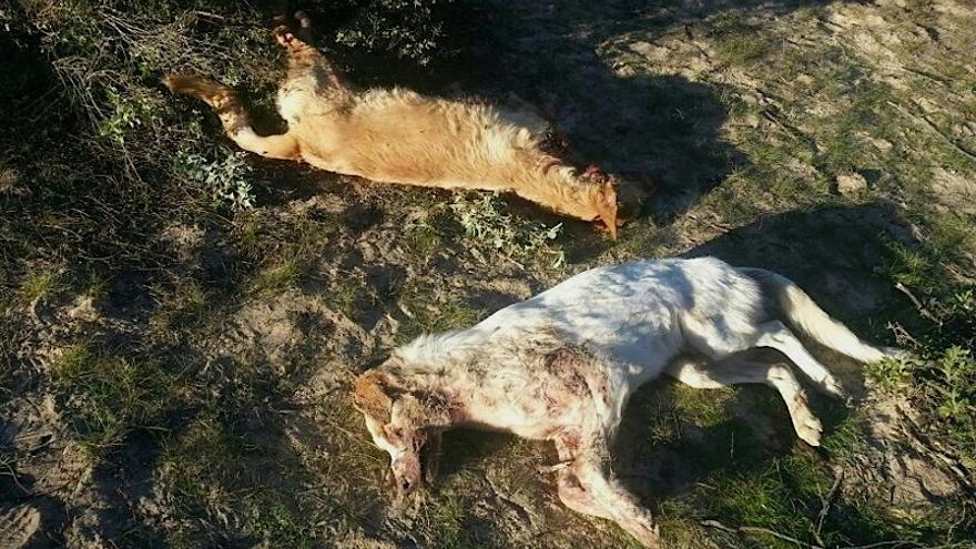 Dos perros abatidos por los cazadores