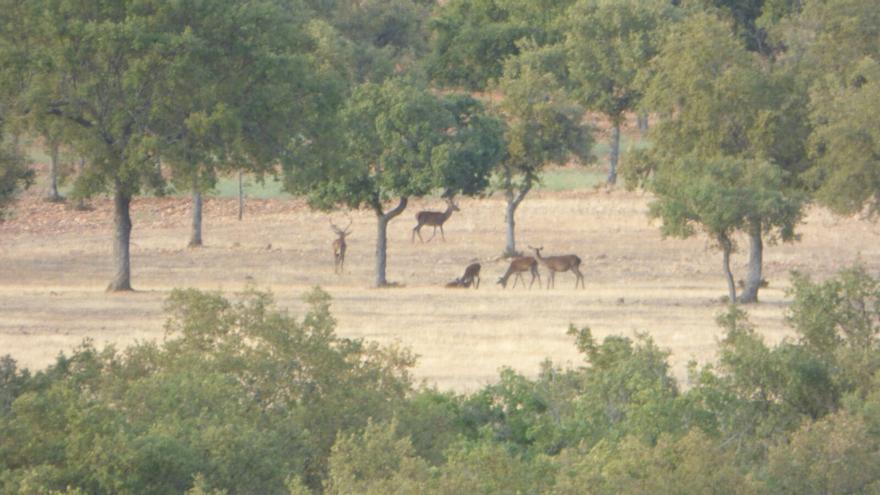 Observatorio natural de los ciervos