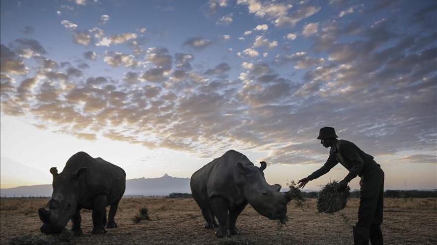 Muere el rinoceronte blanco del norte del zoo de San Diego, el único ejemplar fuera de África