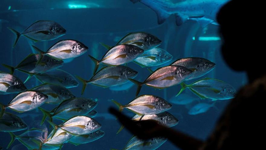 Canarias investiga su ecosistema marino para protegerlo del cambio climático